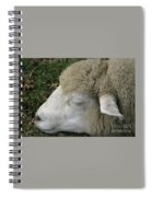 Sheep Sleep Spiral Notebook