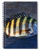 Sheepshead Fish Spiral Notebook