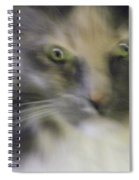 Shelby--dont Mess With Me Spiral Notebook