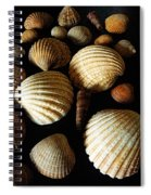 Shell Art - D Spiral Notebook