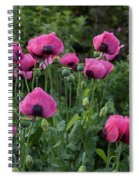Shell Shaped Poppies Spiral Notebook