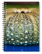 Shell With Pimples Spiral Notebook