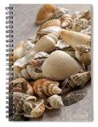 Shellfish Shells Spiral Notebook