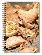 Shells Of Nut Spiral Notebook