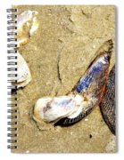 Shells On The Beach Of Jekyll Spiral Notebook