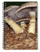Sheltering The Young Spiral Notebook