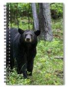 Shenandoah Black Bear Spiral Notebook