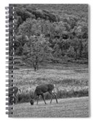 Shh... Bw Spiral Notebook