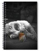 Shih Tzu Sleeping In The Sun Spiral Notebook