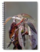 Shimmering Wings- Dragonfly Spiral Notebook