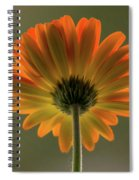 Shine Bright Gerber Daisy Square Spiral Notebook