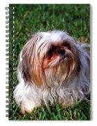 Shitzu Dog Spiral Notebook
