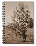 Shoe Tree In Sepia Spiral Notebook