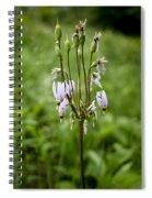 Shooting Star Flower - Wisconsin Spiral Notebook