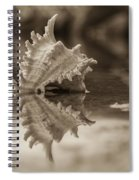 Shore Shell In Sepia Spiral Notebook