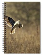Short-eared Owl About To Strike Spiral Notebook