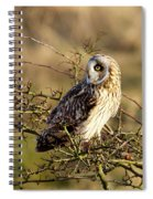 Short-eared Owl In Tree Spiral Notebook