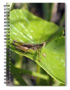 Short Winged Green Grasshopper Spiral Notebook