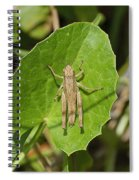Shortwinged Green Grasshopper Spiral Notebook