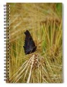 Showing The Dark Side. European Peacock On Barley Spiral Notebook
