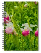 Showy Lady's Slipper Orchids Spiral Notebook