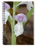 Showy Orchis Spiral Notebook