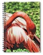 Shy Flamingo Spiral Notebook