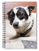 Shy Lonely Mini Fox Terrier Dog Laying On A Bed Spiral Notebook