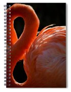 Shy Pose Spiral Notebook