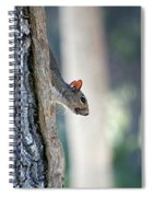 Shy Squirrel Spiral Notebook