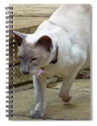 Siamese Exploring Spiral Notebook
