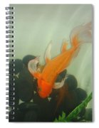Siamese Fighting Fish 1 Spiral Notebook