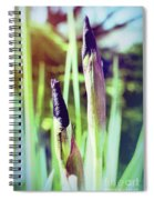 Siberian Iris Bud Spiral Notebook