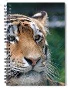 Siberian Tiger 2 Spiral Notebook