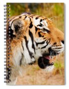 Siberian Tiger In Profile Spiral Notebook