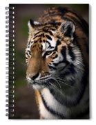 Siberian Tiger Spiral Notebook