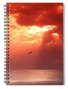 Siesta Key Pelican Spiral Notebook