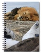 Siesta Time For Lions In Africa Spiral Notebook