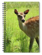 Sika Deer Omagh Spiral Notebook