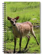 Sika Deer Water Hole Omagh Spiral Notebook