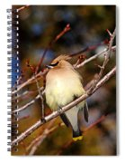 Silky Beauty Spiral Notebook