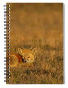 Silly Fox Spiral Notebook