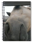 Silly Horse Spiral Notebook