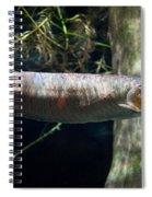 Silver Arowana Fish In Zoo Spiral Notebook