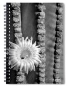 Silver Desert Jewel Spiral Notebook