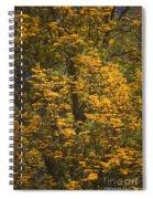 Silver Oak Spiral Notebook