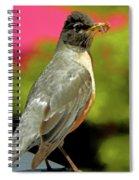 Silver Robin Spiral Notebook