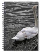 Silver Swan Spiral Notebook
