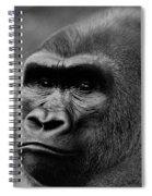 Silverback Gaze Spiral Notebook
