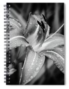 Silvered Lily Spiral Notebook